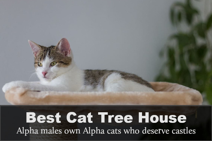 Best Outdoor Cat Tree House: Reviews, Buying Guide & FAQs